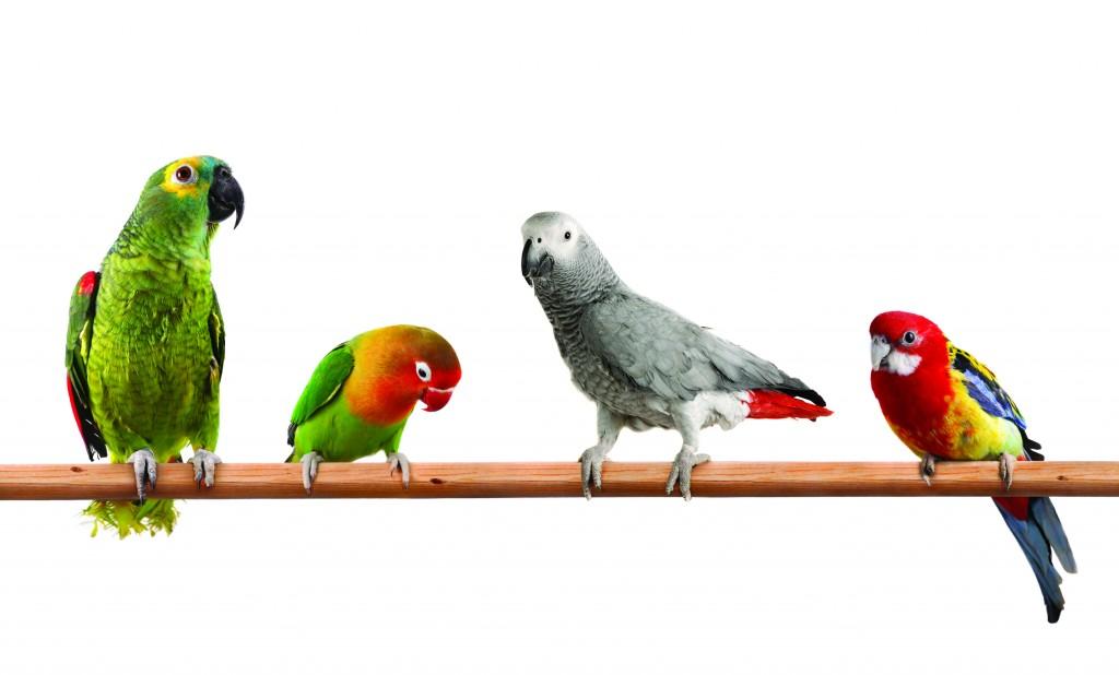 ornitologiya-shabla-kavarna-balchik