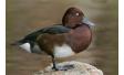 Еднодневен орнитоложки тур в Шабла – наблюдение и заснемане на редки видове птици