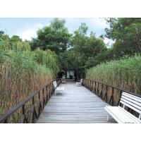 """Маршрут """"Албена"""" и лонгозна гора – биосферният резерват """" Балтата"""""""