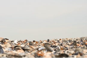 Крапец-девствени дюни и екзотика